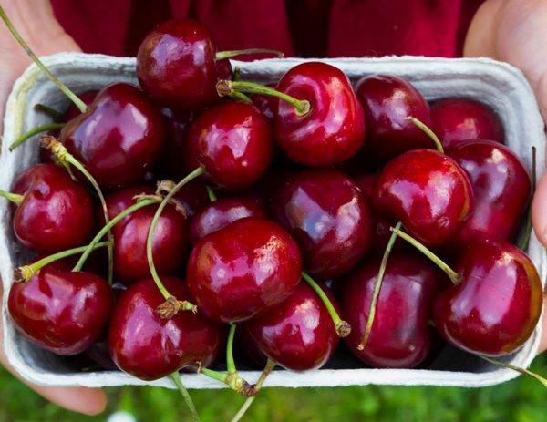 Những loại trái cây là 'thần dược' cho thận