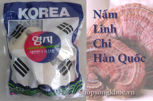 Nấm Linh Chi túi xanh lam Cờ Hàn Quốc