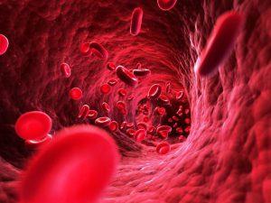Mạch máu không sạch dễ hình thành cục máu đông